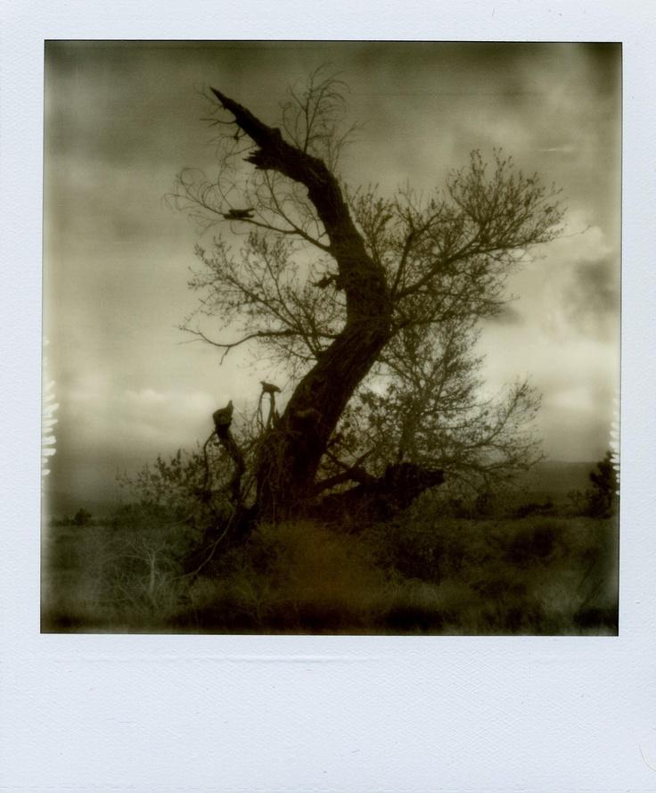 Erin McGuire - polaroid