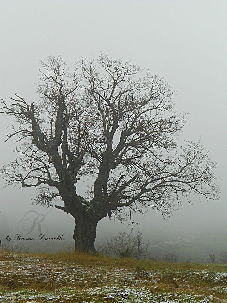 alone in the fog by kxkosmas