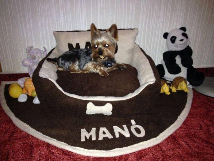 yorkshire terrier kutyafekhely