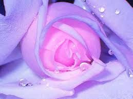 цветы фото - Поиск в Google