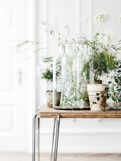 plants: Belle Jars, Idea, Inspiration, Glasses, Green, Interiors, Gardens, Flowers, Indoor Plants