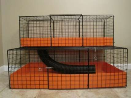 Guinea pig cages for two guinea pig cages in howell new for Guinea pig cages for two