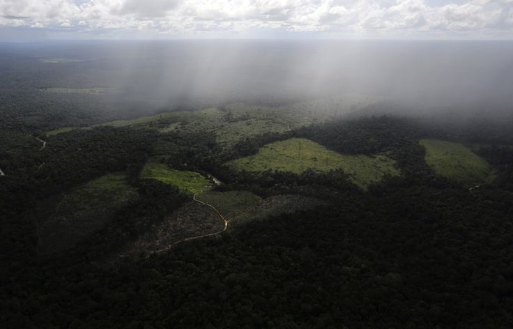 Humans have destroyed 7% of Earth's pristine forest landscapes just since 2000