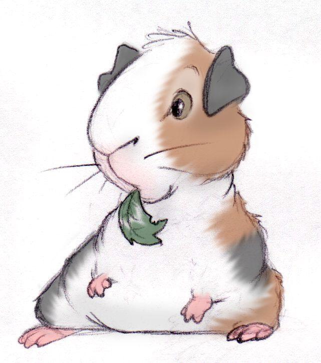 371 Best Guinea Pig Gadgets Images On Pinterest Guinea
