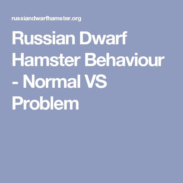 Russian Dwarf Hamster Behaviour - Normal VS Problem