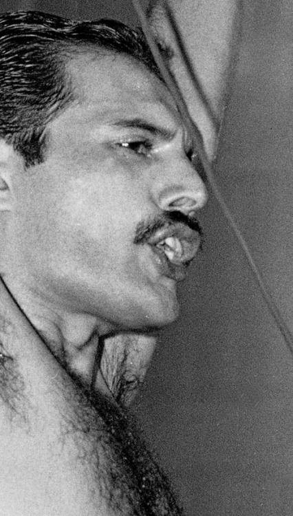 Freddie Mercury. Queen. Performing Freddie Mercury, Wembley, 1984