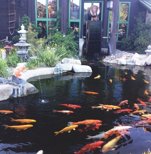 280 best garden ponds waterfalls and features images on for Koi carp pool design