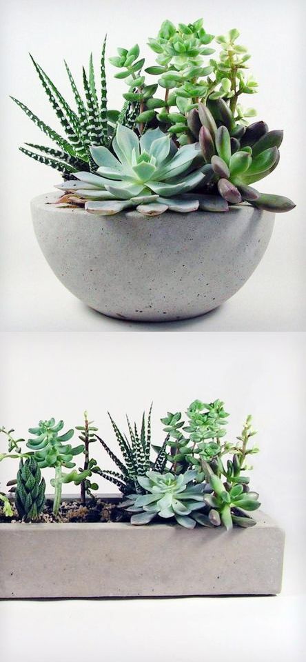 Concrete planters filled with succulents. So pretty and easy to take care of!
