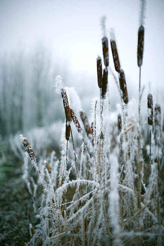 Love photographing in winter. Wonderful textures!