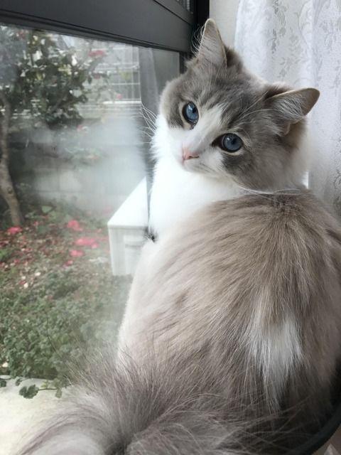 Ich stelle das Bild einer Katze auf, die Sie für die schönste halten, Clemens-Gusoc …   – ♡Catz♡