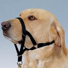 How to Utilize the Gentle Leader and Similar Head Halters in Dog Training