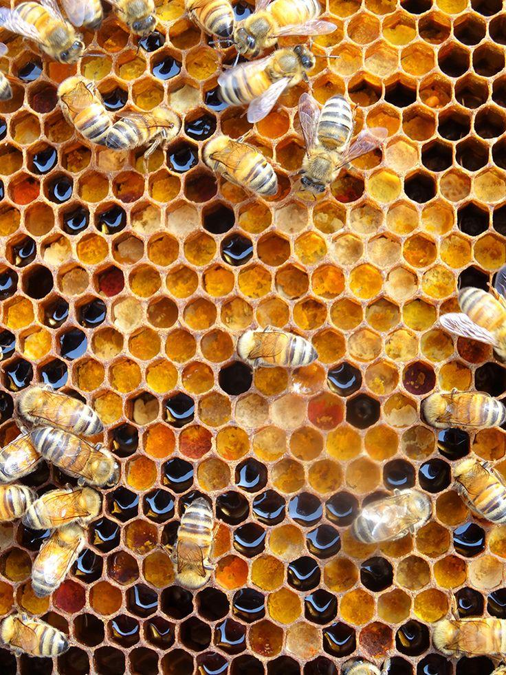 Miel et pollen multicolore | Des Goûts et des COULEURS © Charlotte Dumas