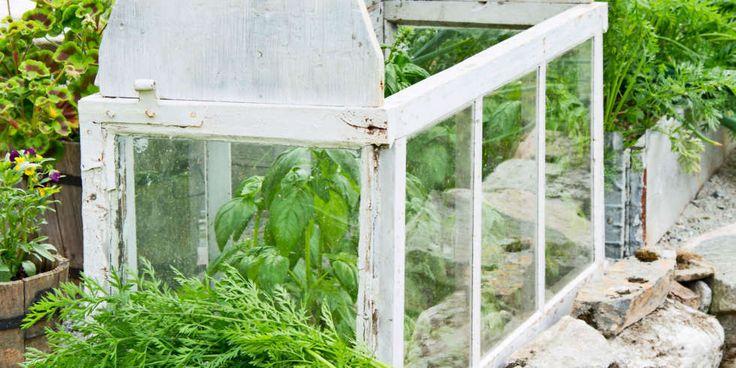 BYGGE DRIVHUS: Et minidrivhus gjør det mulig å dyrke planter som egentlig ikke er beregnet for den norske sommeren.