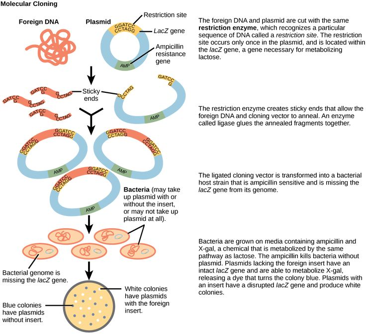 Recombinant DNA-Cloning! Recombinant DNA molecules are formed in a laboratory using methods of genetic recombination to bring together genetic material from multiple sources. The DNA sequences used in the creation of recombinant DNA molecules can originate from any species.
