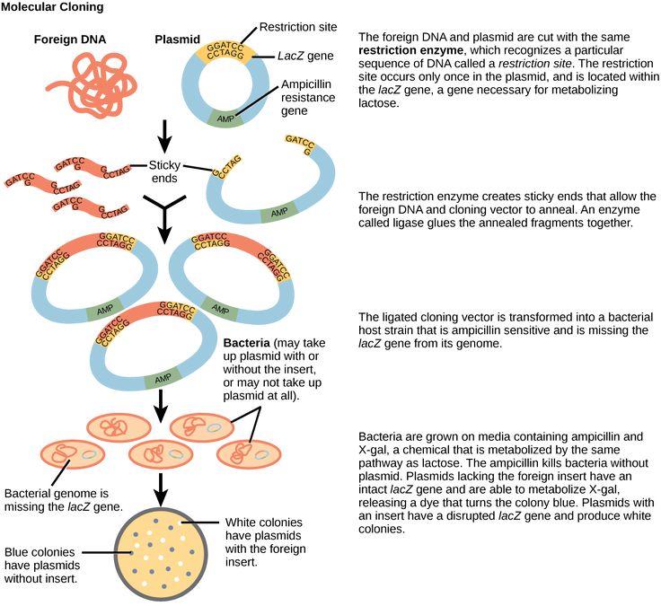 Molecular Genetics: Differentiating Between Various