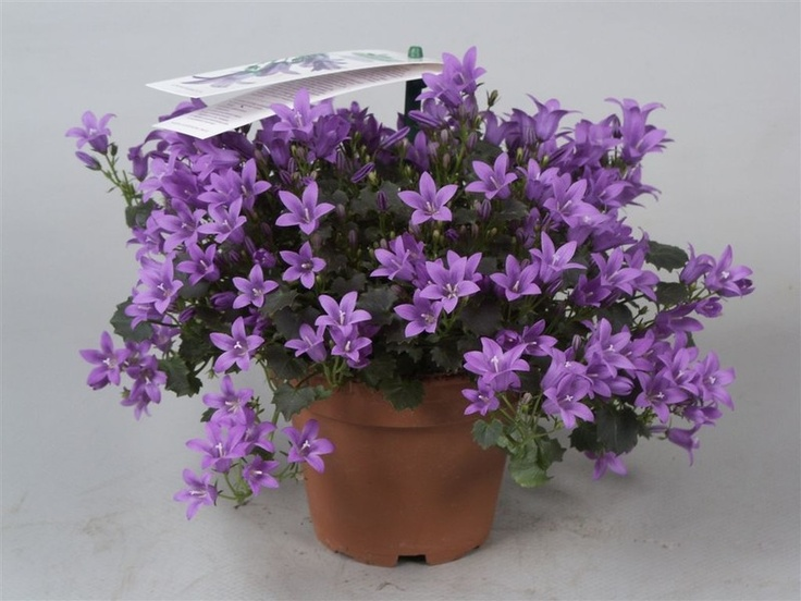 Hardy Indoors And Outdoors Decorative Pots Not Included 640 x 480