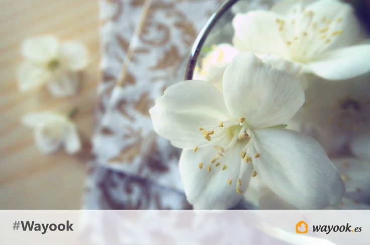 ¿Quieres aprender a hacer ambientadores caseros para tu hogar?  Hoy en el blog de #Wayook te enseñamos como hacer fácilmente algunos ambientadores naturales.  https://www.wayook.es/blog/ahorrar-en-casa/ambientadores-caseros/