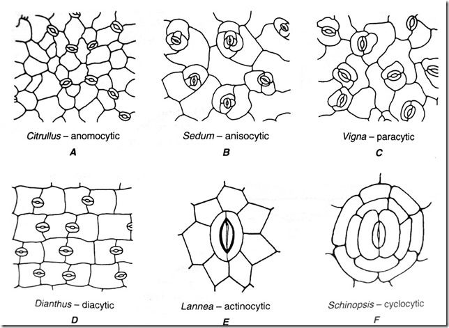 452 best images about cells  cells  cells on pinterest