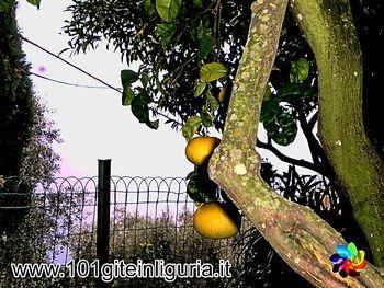 Anelli dei Limoni, a Pieve Alta GIRO DI UN ORETTA A PIEVE DI TECO