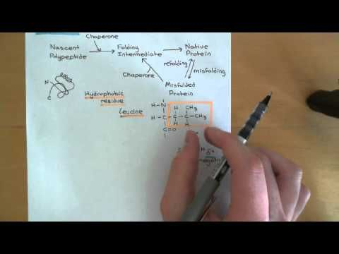 Protein folding and protein folding diseases Part 1 - YouTube