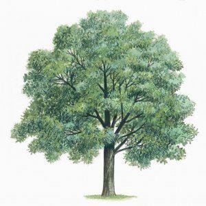 Lo studio. Dall'800 a oggi piantate in Europa più conifere che latifoglie: una scelta, rivela una ricerca, che ha aggravato il riscaldamento globale
