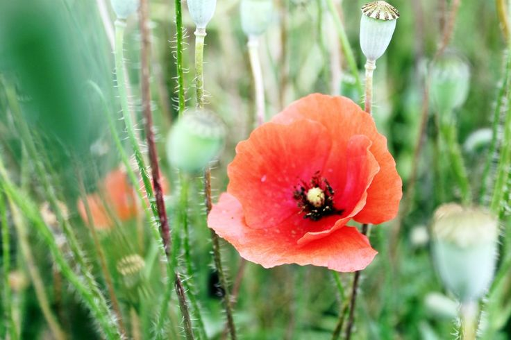 #summer #flowers
