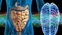 Waarom darmbacteriën enorme impact op gedrag en stemming hebben, neuroloog legt uit