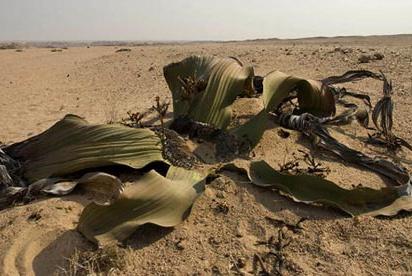 El 22% de las plantas en el planeta están en peligro de extinción