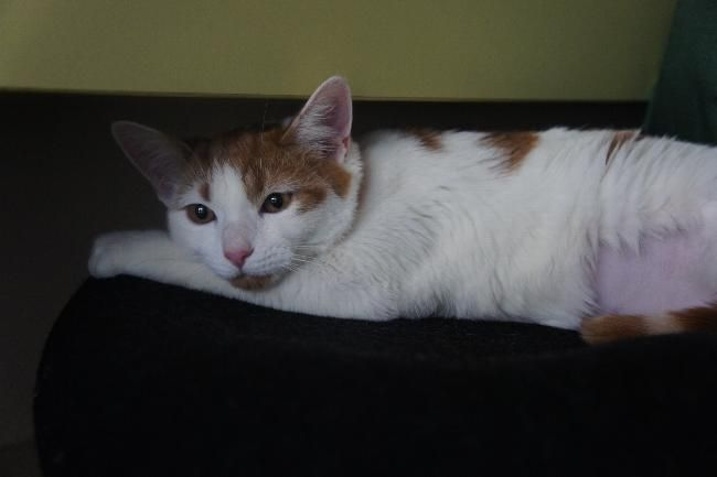 House Sitters Needed Dec 21 2019 Short Term Sydney Nsw Australia House Sitter Cat Sitter Sitter