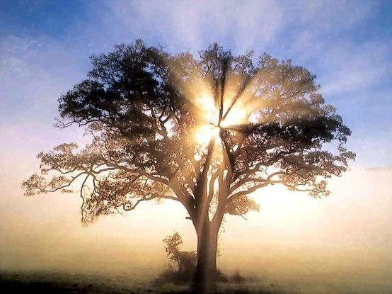 :): The Lord, Lights, Sun Ray, New England, God Is, Trees Of Life, Sunray, Mornings, Heavens