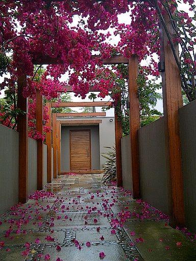 me gusta para a la derecha tener estacionamiento con techo...Bougainvillea in flower. What an entrance.  Designed by Joanne Green Landscape Design. Photo by Michelle Byrne