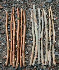 Johannisbeeren durch Steckholz vermehren