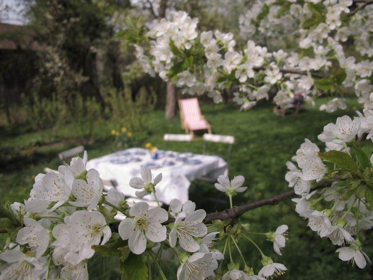 bäckermütze trifft kirschblüte