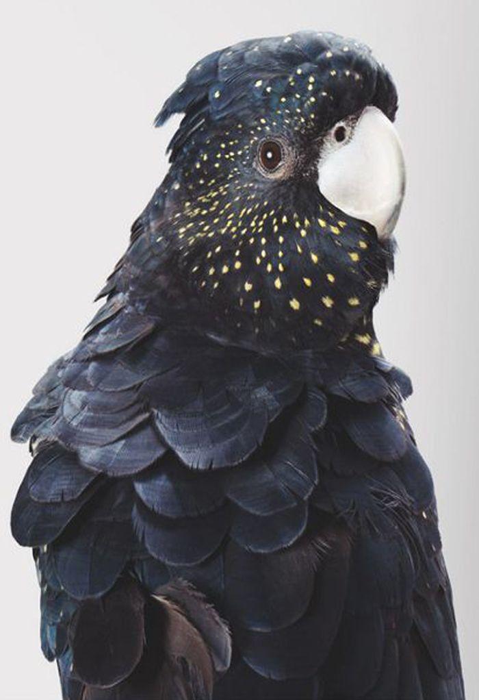 Les 25 meilleures id es de la cat gorie oiseau noir sur for Oiseau noir et gris
