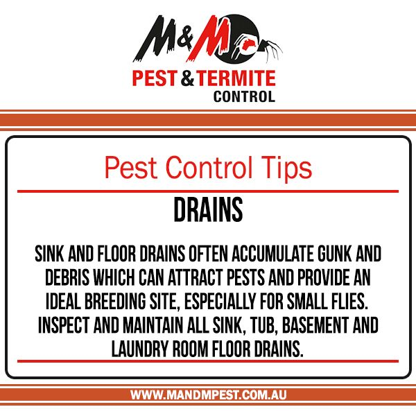 Pest Control Tips: Drains Sink and floor drains often  accumulate gunk and debris which can attract pests and provide an ideal breeding site, especially for small for small flies. Inspect and maintain all sink, tub, basement and laundry room floor drains.