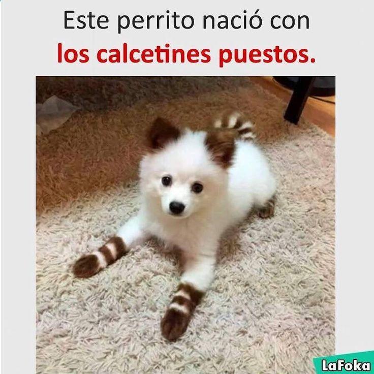 Imagenes de Humor Vs. Videos Divertidos - Mega Memeces ➫➬➫ http://www.diverint.com/memes-mas-divertidos-hablando-del-estimulo-infantil
