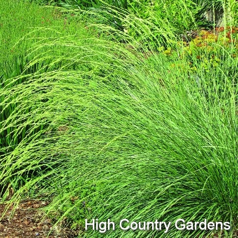 how to grow grass in high traffic