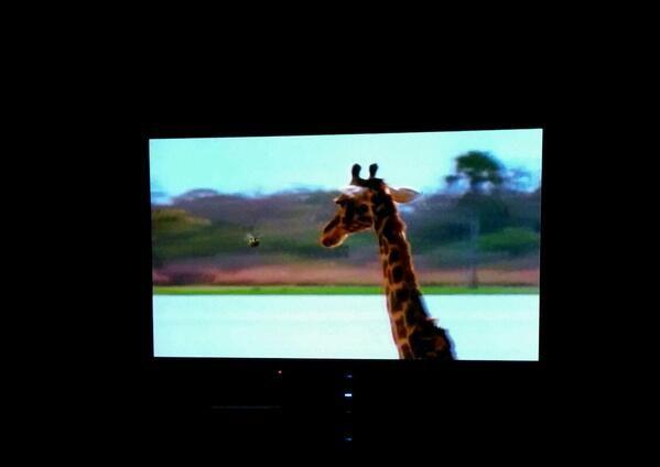 Giraffes ruin family movie night.