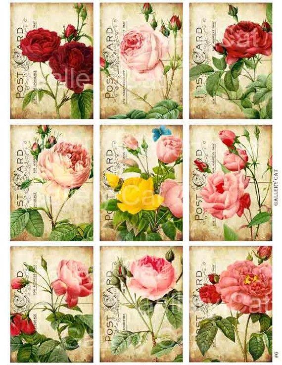 Heirloom Roses on Old Postcard