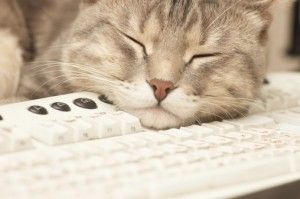 5 Lessons I Learned From My Cat as a Work at Home Woman