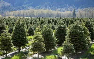 Sustainability a priority as forestry sector plans way ahead #green #sustainability #rmogreen