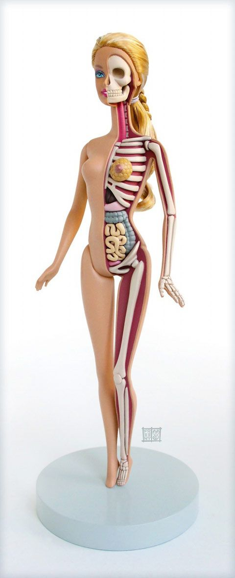 Anatomical Barbie doll. This is so weird, I can't help but like it. For the aspiring young surgeons?