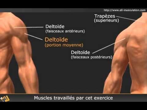 Vidéo des élévations latérales assis - Deltoïde supérieur