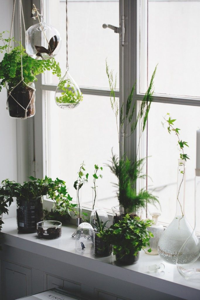 plant beakers (love)