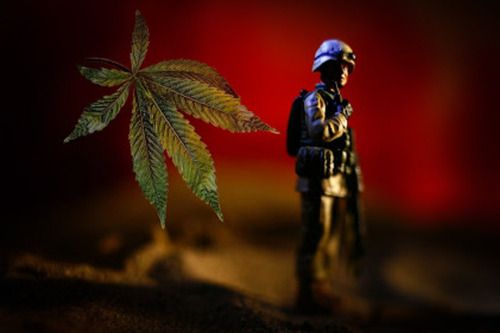 La Légion américaine au secours du cannabis médical...