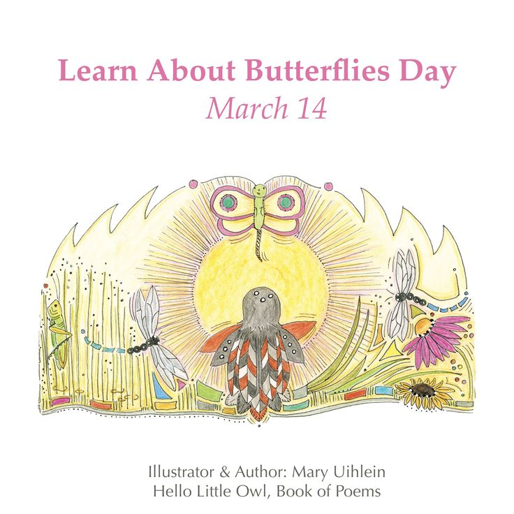 #learnaboutbutterfliesday #butterfly  Illustrator & Author of the Hello Little Owl Children's Stories  www.hellolittleowl.com