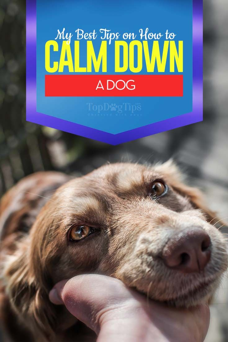 How To Calm Down A Dog Dog Training Calm Dogs Basic Dog Training