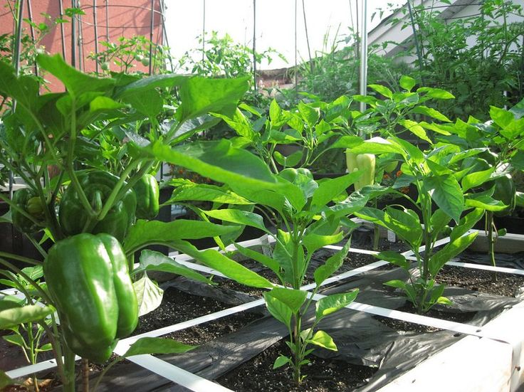 1000 images about compact plants for small spaces on for Terrace vegetable garden india