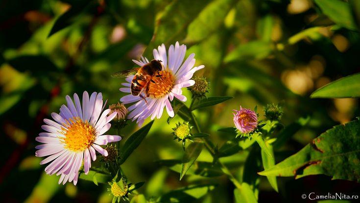 bee, flowers