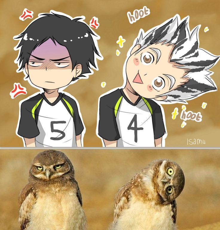 Owls <3 BokuAka ~~ Bokuto Koutaro & Akaashi Keiji